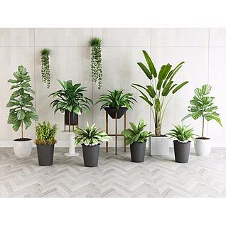 绿植盆栽3d模型3d模型