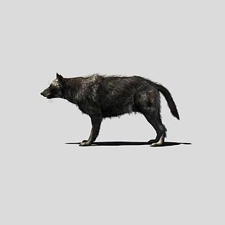 黑狼3d模型