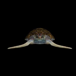 海龟模型3d模型