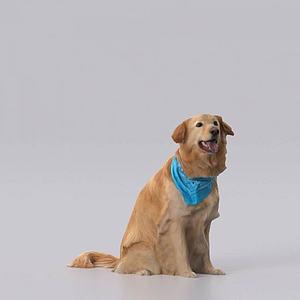 金毛寻回犬模型