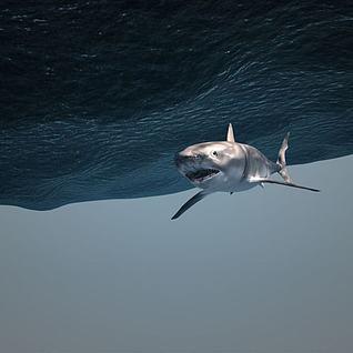 海底世界鲨鱼3d模型