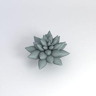 冬美人多肉植物3d模型
