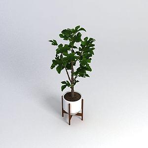 室内盆栽植物模型