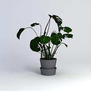 绿萝植物3d模型