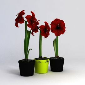 花卉3d模型