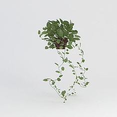 绿萝盆栽3D模型3d模型