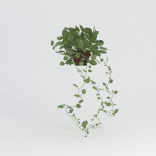 绿萝盆栽3d模型