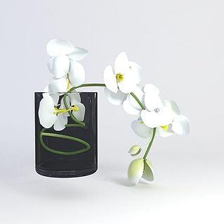 装饰花卉3d模型