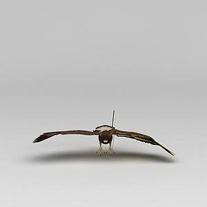 3d鷹模型