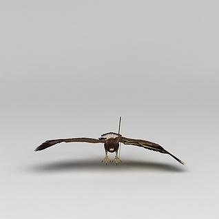 鹰3d模型