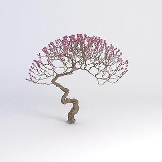 开花植物3d模型