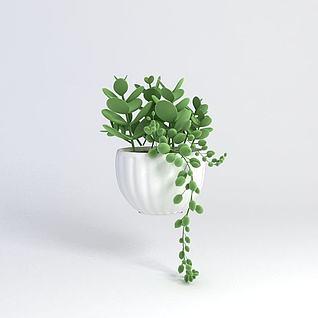 多肉植物3d模型