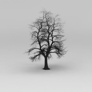 冬天的树3d模型
