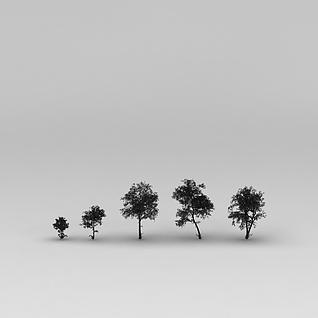 公园树木3d模型