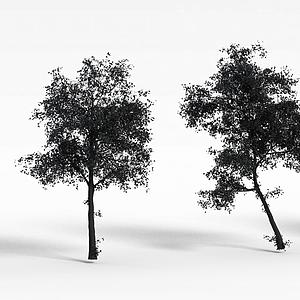 公园树木模型