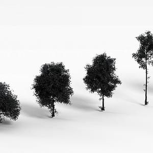道路绿化树模型
