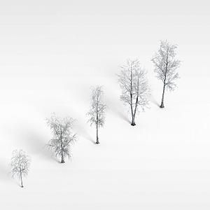 冬天杨树模型