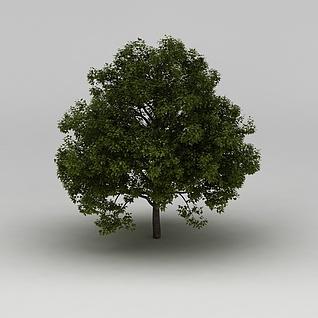 茂盛的绿树3d模型