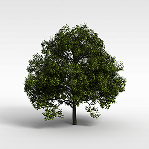 茂盛的綠樹模型3d模型