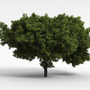茂盛乔木模型