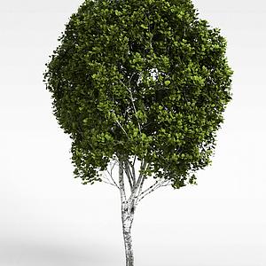 樹模型3d模型