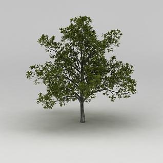 树木3d模型