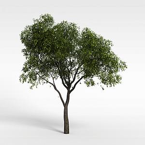 綠樹模型3d模型
