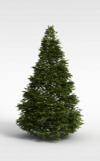 柏树3d模型
