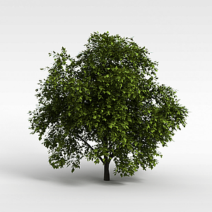 树木模型3d模型