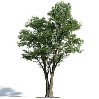 多杆植物模型3d模型