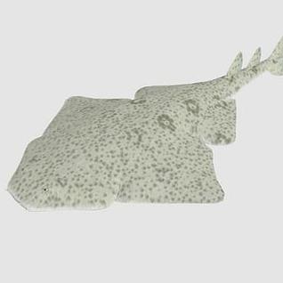 海洋鱼3d模型