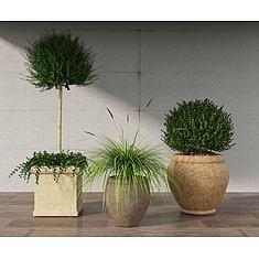 植物盆栽3D模型3d模型