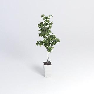 庭院绿植3d模型
