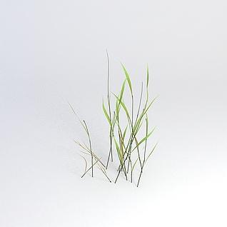 芦草3d模型