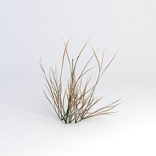 枯草3d模型
