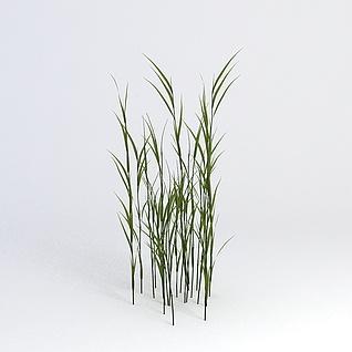花草绿植3d模型