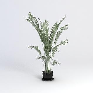 3D盆景植物模型3d模型