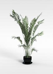 3D盆景植物模型模型3d模型