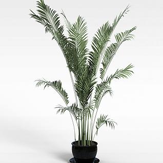 3d3D盆景植物模型模型