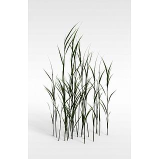 草3d模型