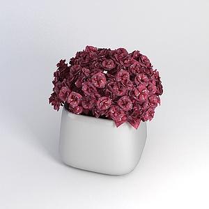 裝飾花卉模型3d模型