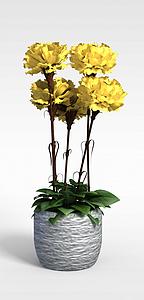 花卉盆栽模型3d模型