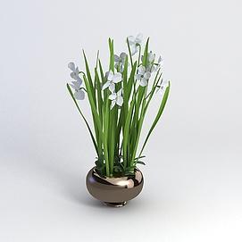 兰花3D模型