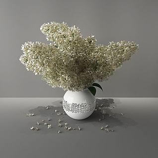 白色小花3d模型