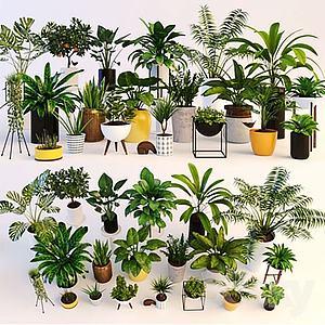 3d盆栽植物模型