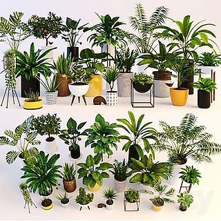盆栽<font class='myIsRed'>植物</font>3d模型