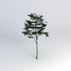 一棵树模型