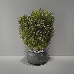 竹子绿植盆栽3d模型
