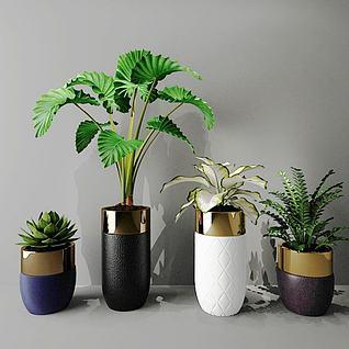室内绿植装饰3d模型