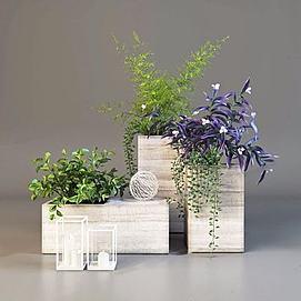 装饰盆栽<font class='myIsRed'>植物</font>3d模型